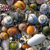 Shell pick 'n' mix, lightly arranged, Photo by �luewave