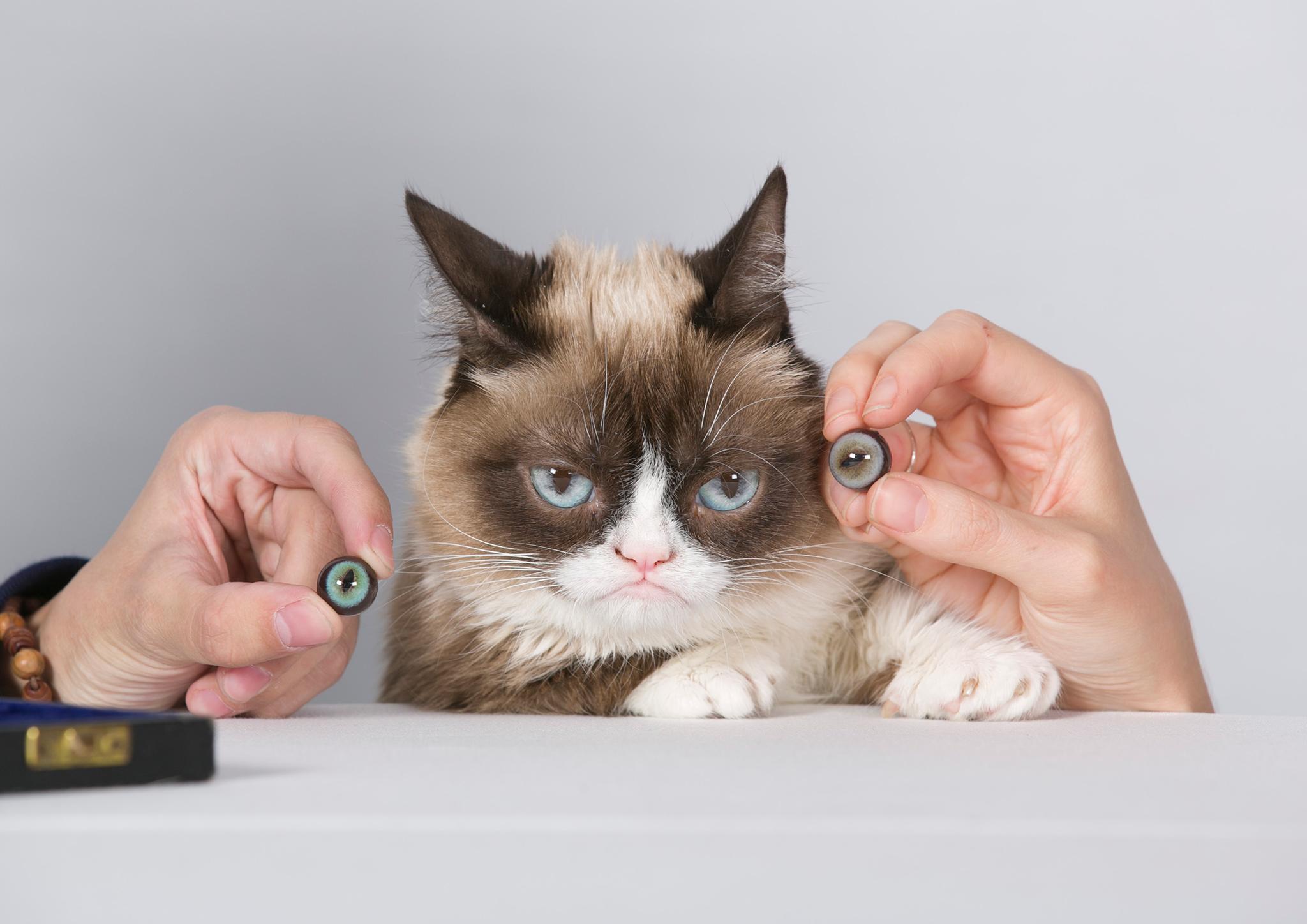 Grumpy-Cat-Sitting-MT-Touring-2015-01