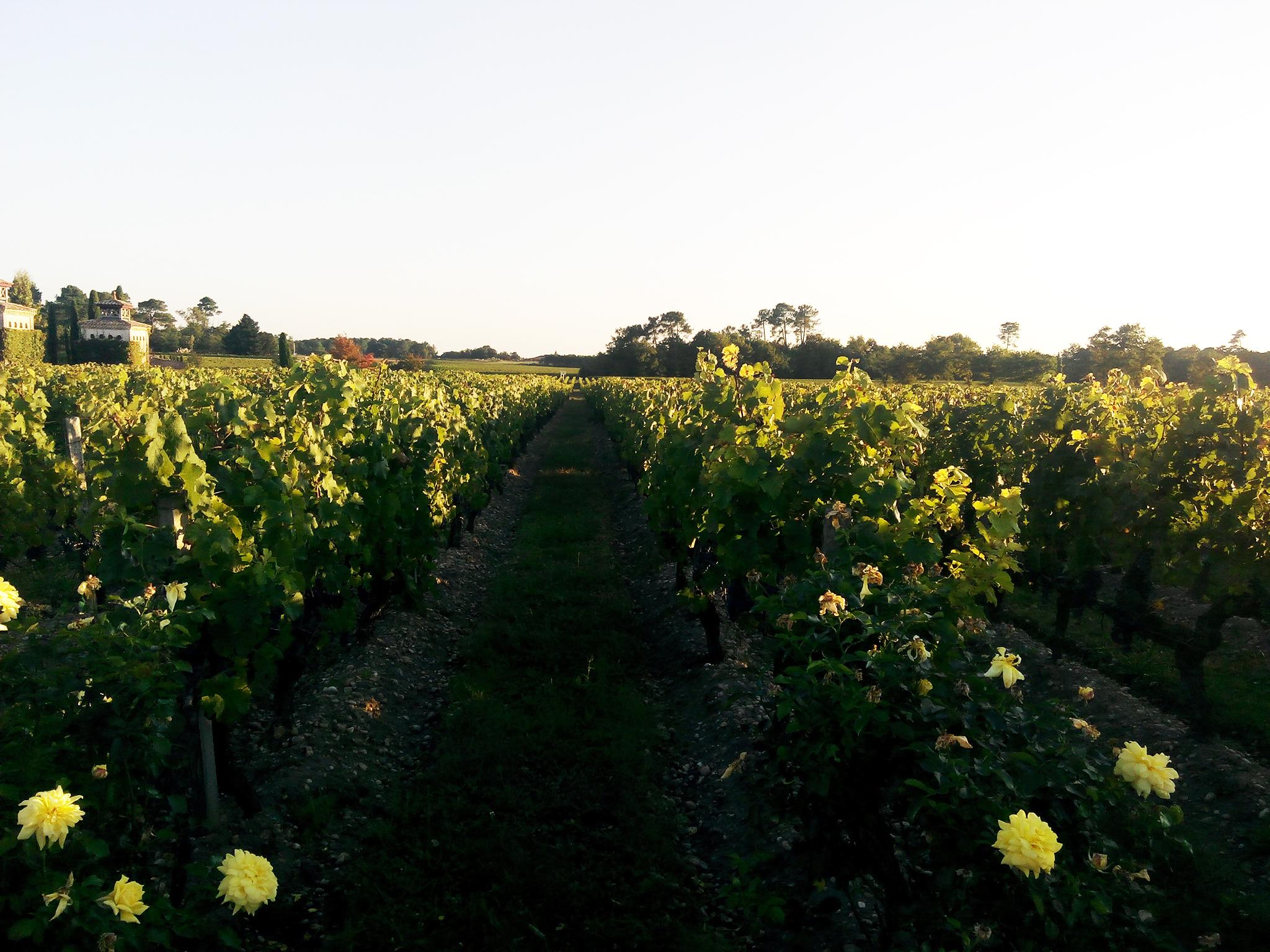 Bordeaux-France-Trip-Vineyards-07